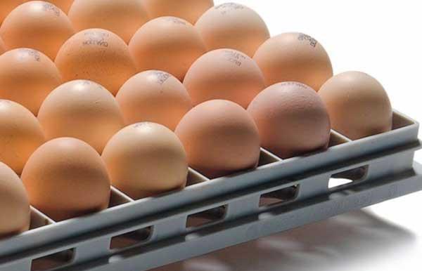 بهترین زمان برای خرید تخم نطفه دار - اندیشه سبز