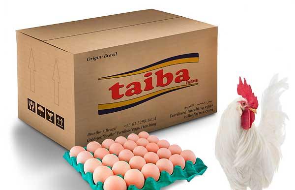 خرید تخم نطفه دار از اینترنت - اندیشه سبز