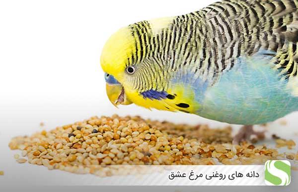 دانه های روغنی مرغ عشق - اندیشه سبز