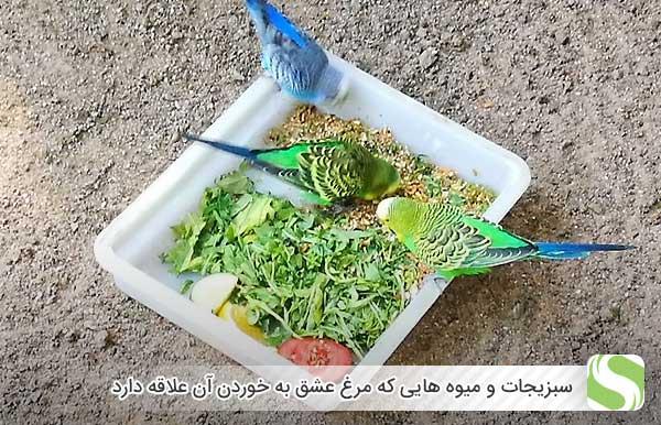 سبزیجات و میوه هایی که مرغ عشق به خوردن آن علاقه دارد - اندیشه سبز