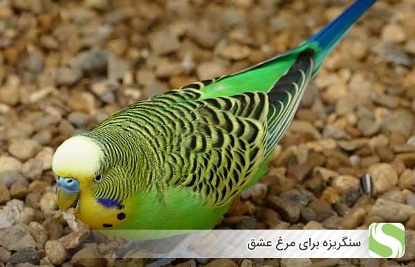 سنگریزه برای مرغ عشق - اندیشه سبز