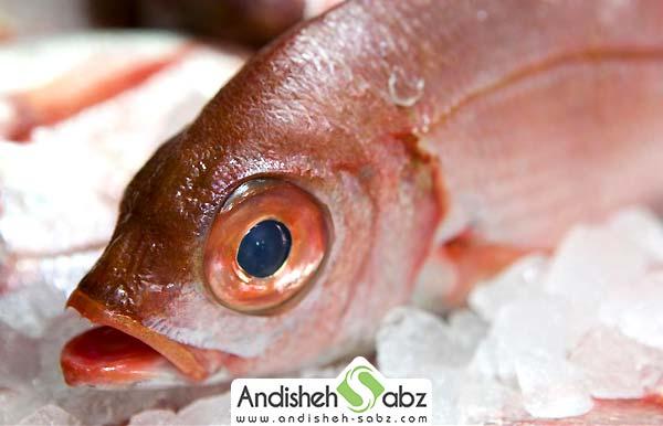 شرایط نگهداری ماهی و محصولات دریایی در سردخانه - اندیشه سبز