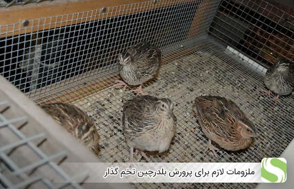 ملزومات لازم برای پرورش بلدرچین تخم گذار - اندیشه سبز