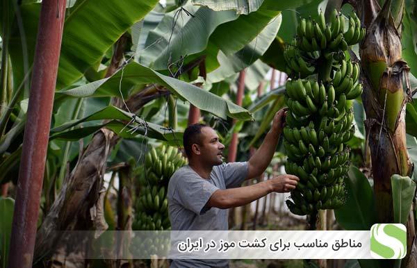 مناطق مناسب برای کشت موز در ایران - اندیشه سبز