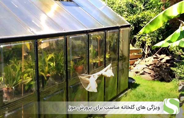 ویژگی های گلخانه مناسب برای پرورش موز - اندیشه سبز