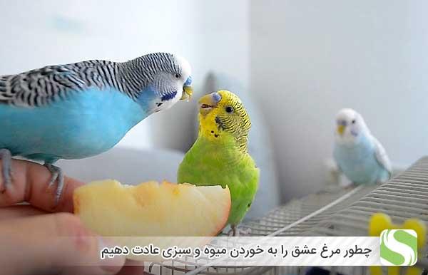 چطور مرغ عشق را به خوردن میوه و سبزی عادت دهیم - اندیشه سبز