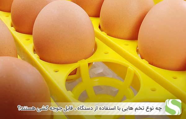 چه نوع تخم هایی با استفاده از دستگاه ، قابل جوجه کشی هستند؟ - اندیشه سبز