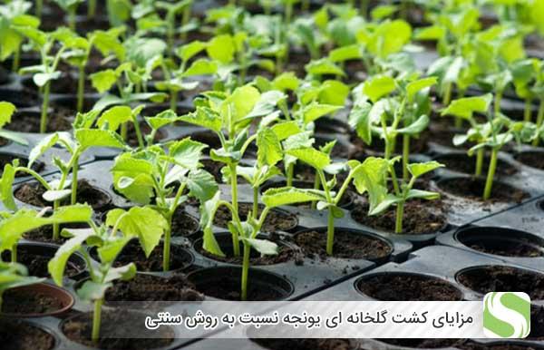 مزایای کشت گلخانه ای یونجه نسبت به روش سنتی - اندیشه سبز