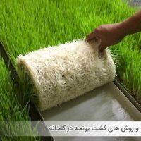 مزایا و روش های کشت یونجه در گلخانه - اندیشه سبز