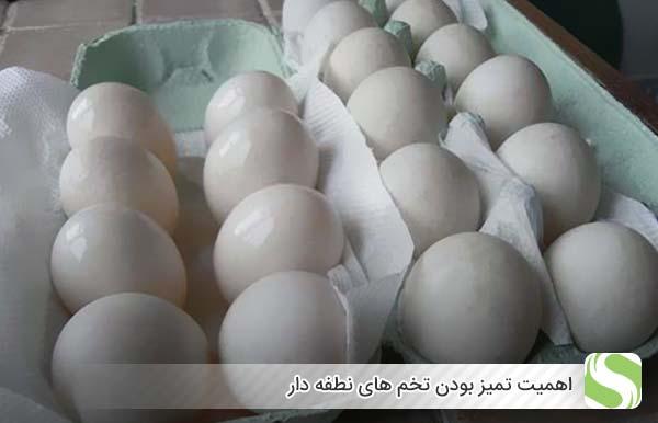اهمیت تمیز بودن تخم های نطفه دار - اندیشه سبز