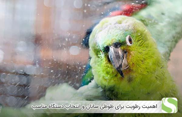 اهمیت رطوبت برای طوطی سانان و انتخاب دستگاه مناسب - اندیشه سبز