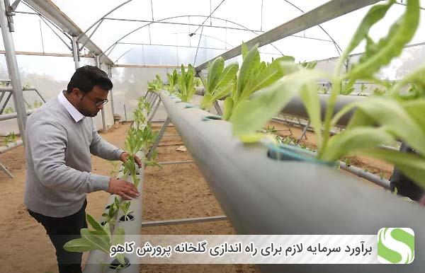 برآورد سرمایه لازم برای راه اندازی گلخانه پرورش کاهو - اندیشه سبز