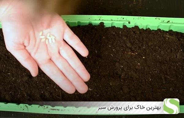 بهترین خاک برای پرورش سیر - اندیشه سبز