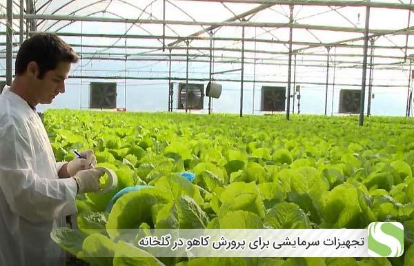 تجهیزات سرمایشی برای پرورش کاهو در گلخانه - اندیشه سبز