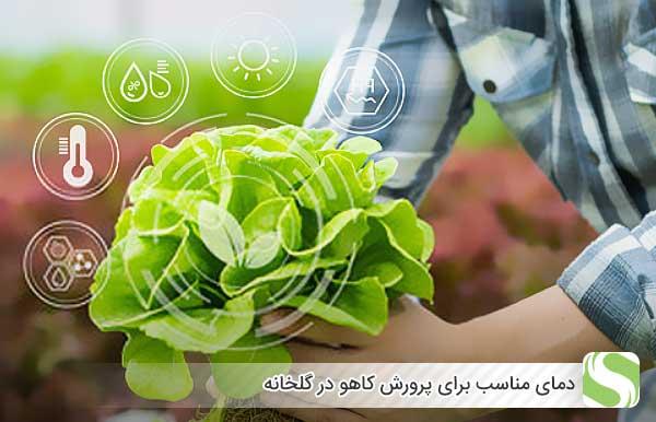 دمای مناسب برای پرورش کاهو در گلخانه - اندیشه سبز
