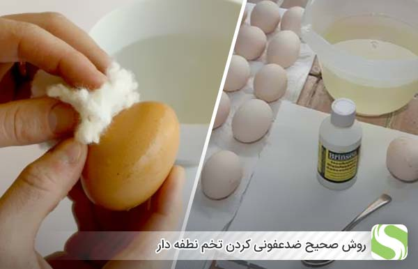 روش صحیح ضدعفونی کردن تخم نطفه دار - اندیشه سبز