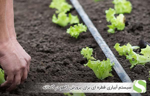 سیستم آبیاری قطره ای برای پرورش کاهو در گلخانه - اندیشه سبز