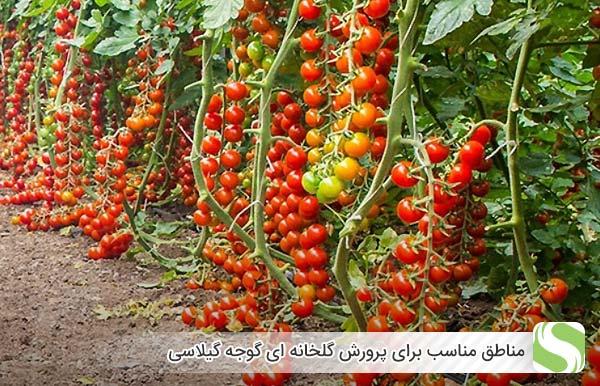 مناطق مناسب برای پرورش گلخانه ای گوجه گیلاسی - اندیشه سبز