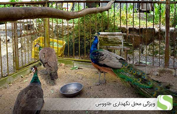 ویژگی محل نگهداری طاووس - اندیشه سبز