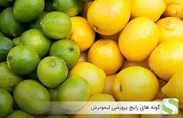 گونه های رایج پرورشی لیموترش - اندیشه سبز