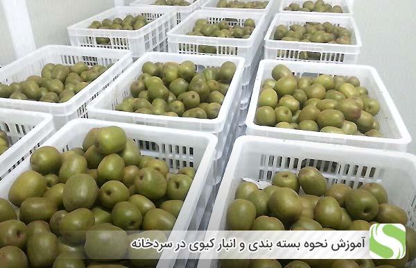 آموزش نحوه بسته بندی و انبار کیوی در سردخانه - اندیشه سبز