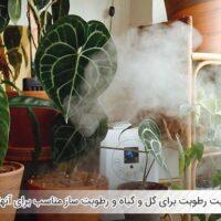 اهمیت رطوبت برای گل و گیاه و رطوبت ساز مناسب برای آنها - اندیشه سبز