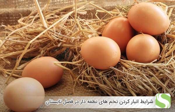 شرایط انبار کردن تخم های نطفه دار در فصل تابستان - اندیشه سبز