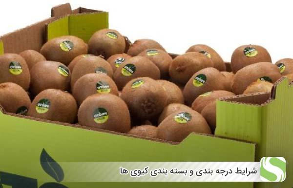 شرایط درجه بندی و بسته بندی کیوی ها - اندیشه سبز