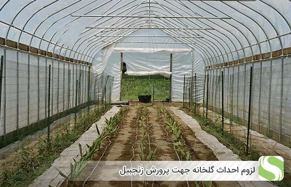لزوم احداث گلخانه جهت پرورش زنجبیل - اندیشه سبز