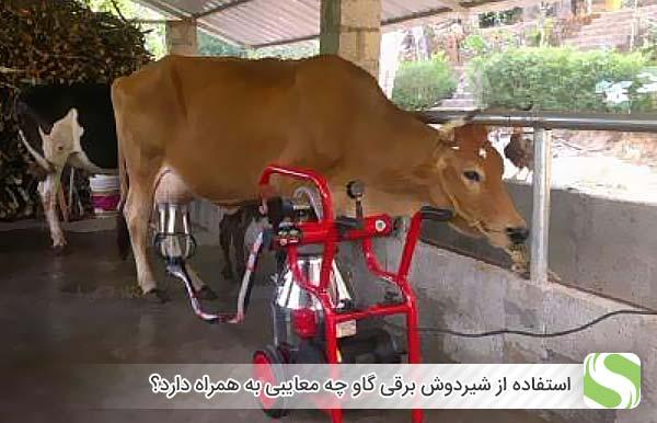 استفاده از شیردوش برقی گاو چه معایبی به همراه دارد؟ - اندیشه سبز