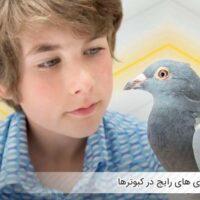بیماری های رایج در کبوترها - اندیشه سبز