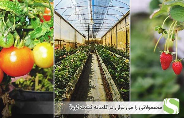 چه محصولاتی را می توان در گلخانه کشت کرد؟ - اندیشه سبز